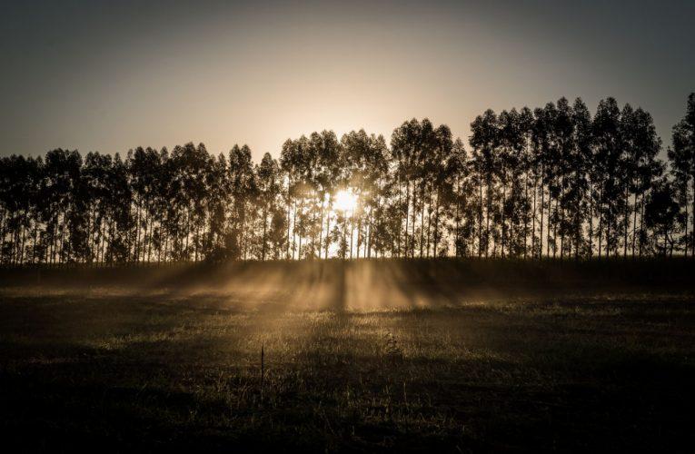 Tempo seco: umidade relativa pode chegar a 20% Botucatu