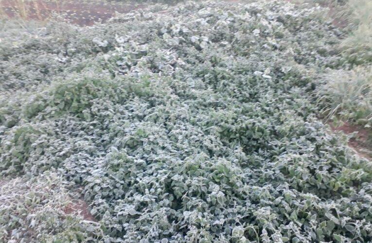 Geada congela 80% das hortaliças da horta comunitária de Itatinga após chegada de massa de ar frio