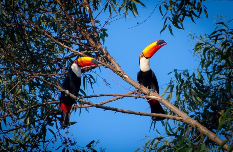 """Turismo lança Programa """"Botucatu Cidade Observadora de Aves"""" nesta quarta, 23"""