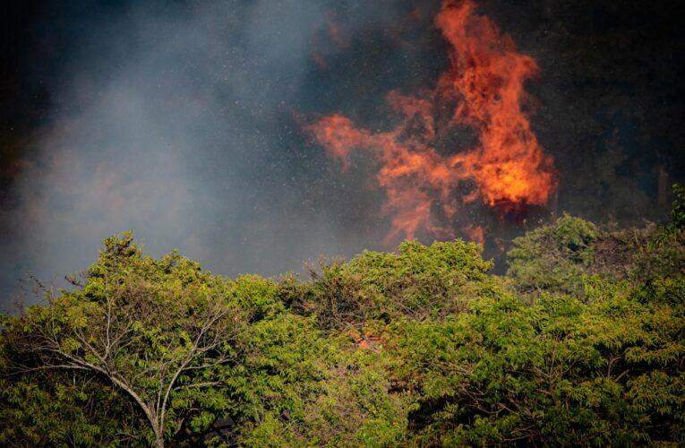 Estado de São Paulo tem o maior número de queimadas em 11 anos