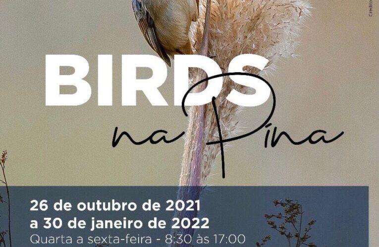 """Inédita exposição de fotografias de aves """"Birds na Pina – Aves de Botucatu"""" estreia no próximo dia 26, em Botucatu"""