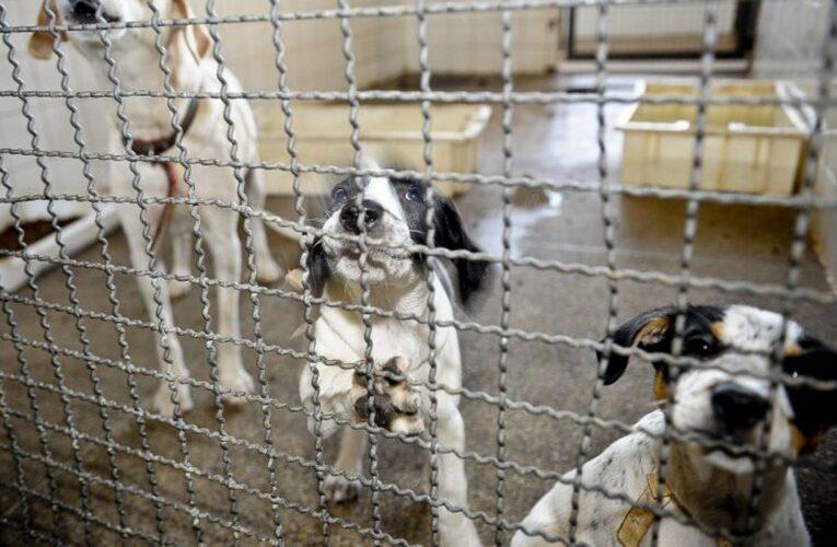 Bolsonaro sanciona lei que proíbe eutanásia de cães e gatos de rua