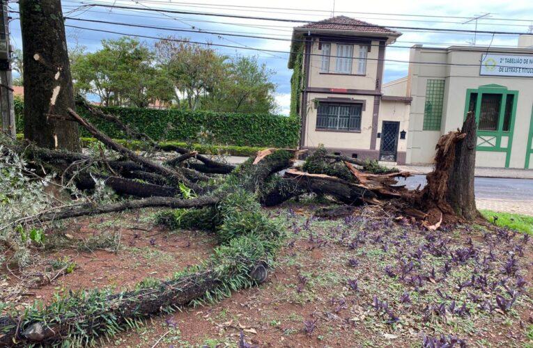 Queda de árvore durante temporal causa estragos na rede elétrica no centro de Botucatu